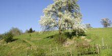 Für uns der Schutzbaum unseres Grundstücks
